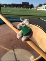 Koala on the drums.